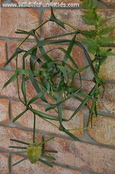 Make Nature's Spider Web