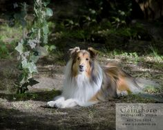 Gainsboro Studio welcomes pets for fabulous portraits of valued family members!