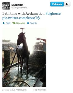Bath time for Acclamation!