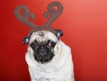 Yeah, this Christmas crap is very unappealing....nice mug shot!