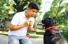 Applied Dog Behavior and Training