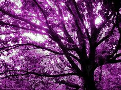 Violet Rays by *Starlachris on deviantART