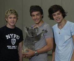 koalas-