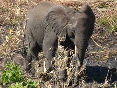 This project supports conservation activities in Thuma Forest Reserve, Malawi, to provide a safe future for its remaining endangered elephant population and habitat.