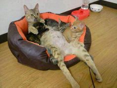 Single mother of three…TAKING CARE OF MEOWRY BABIES!!!!!  ;-)