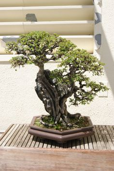 Chinese Pavilion at the U.S. National Bonsai-Penjing museum