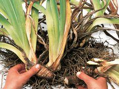 September Gardening To-Do List --> http://www.hgtvgardens.com/care-and-maintenance/september-to-do-list?s=14&soc=pinterest