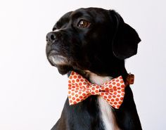Puppy bowties are the cutest!