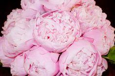 Looove pink peonies!