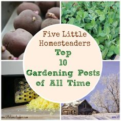 Top 10 Gardening Posts from Five Little Homesteaders - Some GREAT information here!
