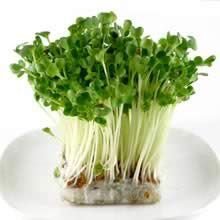 "Growing ""super-power sprouts"" (sunflour) and others to try"