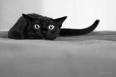 crazy cats, kitty cats, kitten, anim, funni, black cats, dog, kitti, crazy eyes