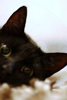 Black cat! photography