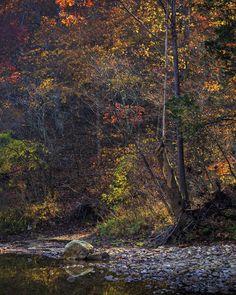 Fall color at Big Hollow, Buffalo National River.