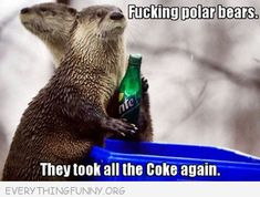 funny caption otter polar bears took all the coke again