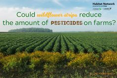Pesticides are used
