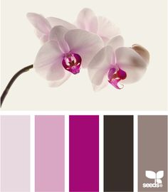 Orchid color palette by Design Seeds purpura paleta de cores