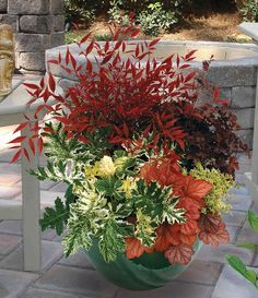 Nandina, HeucheraFire and Ice This container features Heuchera 'Black Beauty', Acanthus 'Tasmanian Angel' and Heuchera 'Georgia Peach', making this container a dramatic focal piece in front or back outdoor living spaces.