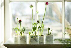 Head Start: A Windowsill Seed Garden. See how on the Bulletin. #seedstarting #potpress