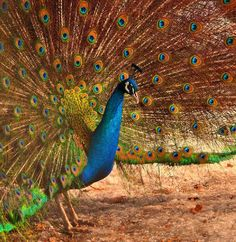 Shangrala's Colorful Birds 2