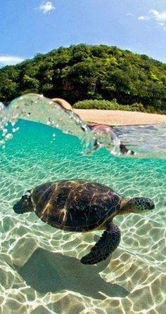 Sea turtle. North Shore of Oahu, Hawaii