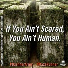 The Maze Runner on Pinterest | The Maze Runner, Maze ...