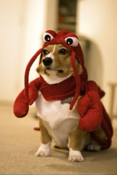 dogs, halloween costumes, pet, outfit, suit
