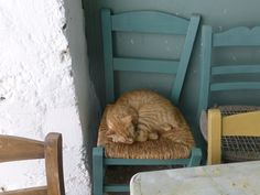 Yes, not great porch or even a veranda without a cat resting in it!