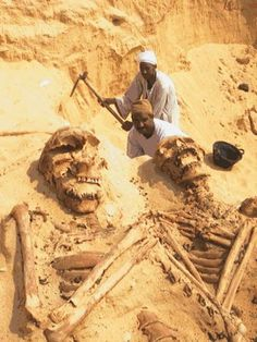 giant skeletons excavation