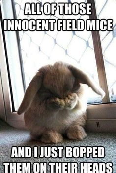 Repentant Bunny Foo Foo