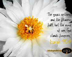 The Word of our God stands forever.  Isaiah 40:8  #Bible