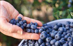 blueberries taste-of-cool