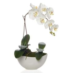 Potted Phalaenopsis from Z Gallerie