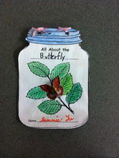 butterfli, scienc idea, classroom idea, books, bug