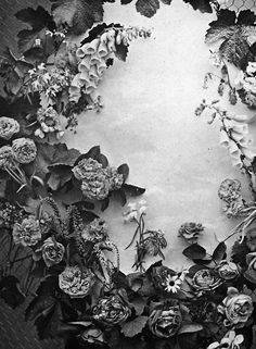 fleur, cinza, botani, bloemgroen, flora, composit, cmek, art, bloom