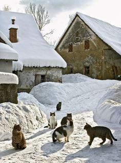 Winter kittens in a small village