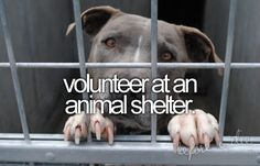 and be one of the volunteers that take in rescued animals and nurse them back to help to be put up again for adoption.