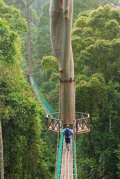 Borneo Rainforest Canopy Walkway | Incredible Pics #placestogothingstosee