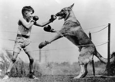 A boy boxes a dog // Date unknown