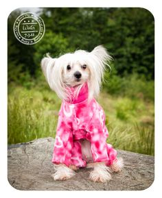 Winter - July 3 - Chinese French Crested