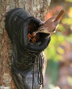shoe bird nest