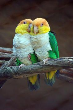 Cute ones.