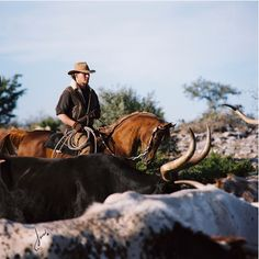 Patrick Swayze riding Tammen while working cattle...awesome!