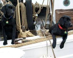 pretty pups
