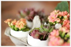 egg shell succulents planters for easter
