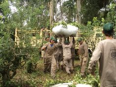 The crew works together to hoist yerba mate from the 2012 Andresito harvest into the transport.