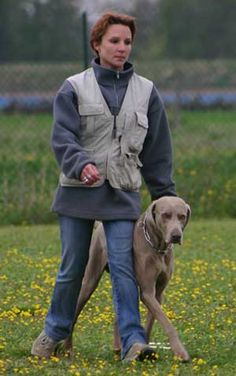 How Dogs Learn when Dog Training