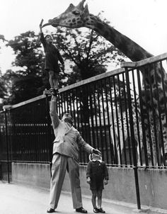 london, the zoo, sons, old photos, zoos, animal, kid, photographi, giraffes