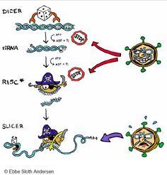 Molecular Biology to write to me
