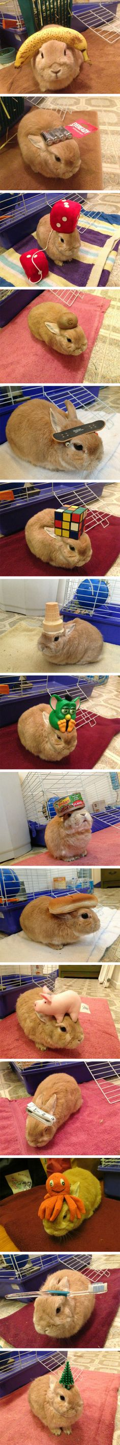 This bunny is patient.